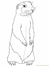 prairie gopher or prairie dog coloring page free gopher or