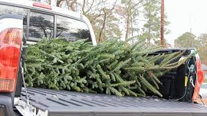 Christmas Tree Pick Up Small Christmas Tree Being Pulled Off And Put Back On A Pickup