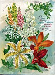 flower seed packets 197 best vintage seed packets images on seed catalogs