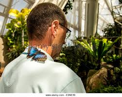 butterfly on shoulder stock photos butterfly on shoulder stock