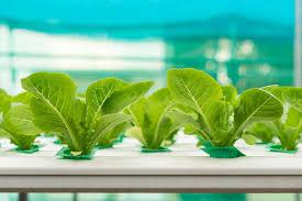 about hydroponics and aquaponics uponics hydroponics and