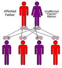 mendelian traits in humans wikipedia