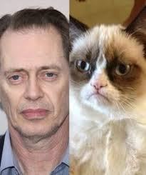 Steve Buscemi Eyes Meme - steve buscemi s eyes meme things that make me laugh pinterest