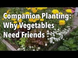 17 best images about vegetable garden beginner plans on pinterest
