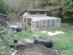 my girls want a backyard aviary questions backyard chickens
