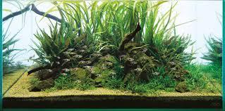 Substrate Aquascape Ada Aqua Soil Malaya And Africana Aquascaping Wiki