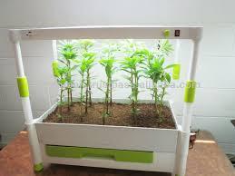 how to indoor vegetable gardening fresh indoor vegetable