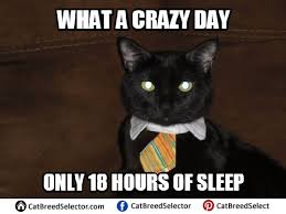 Business Cat Memes - business cat memes cat breed selector