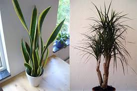 best plants for air quality clean that indoor air with plants mark saidnawey s gardening blog