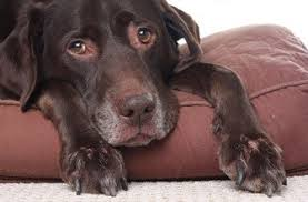 pet cremation nj sussex county nj animal clinic in hamburg pet cremation grief