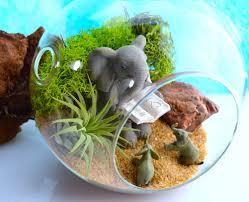 elephant terrarium kit medium 5 5