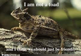 Horny Toad Meme - animal capshunz horny toad funny animal pictures with captions