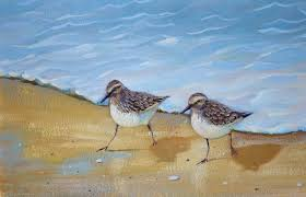 sandpiper birds just about finished p j cook artist studio