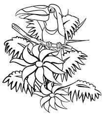beautiful hornbill rainforest coloring page beautiful hornbill
