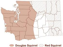 Map Of Spokane Washington Western Gray Squirrels And Other Squirrels Of Washington