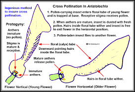 Where Is The Pollen Produced In A Flower - stinking flowers
