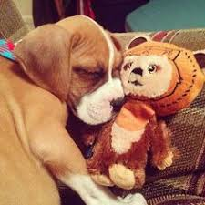 boxer dog training tips thanks for sharing r v ds master the top 5 dog training tips