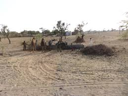 thar desert saturday february 21 2015 thar oasis resort u0026 camp rajasthan