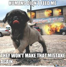Feed Me Meme - humans didn t feed me by greentree meme center