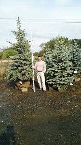 harford county landscape trees baltimore county privacy trees