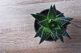 plante d駱olluante chambre 6 plantes pour purifier l air de votre chambre
