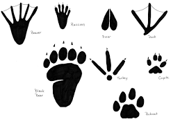free coloring pages bobcat footprint free download clip art