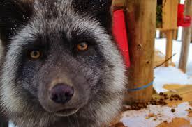 our animals ferme 5 étoiles centre de vacances saguenay québec