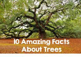 10 amazing tree facts brogan list