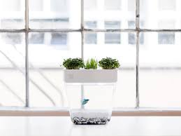 This StressFree Fish Tank Lets Plants Do The Cleaning WIRED - Fish cleaning table design