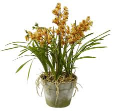 cymbidium orchids orchids in clay pot 31 yellow