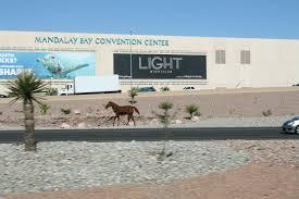 Silverton Casino Buffet Coupons by O U2013 Bellagio Las Vegas Nevada 5 14 2014 U2013 Http