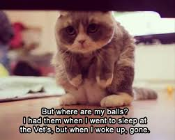Saturday Memes 18 - 18 funny animal pics for your saturday funny animal funny animal