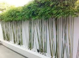 bamboo privacy fence colors fence ideas flexible and