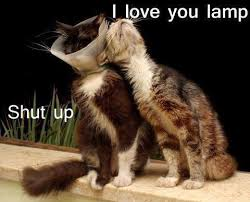 when cats riff on each other funny pet humor cute cat meme