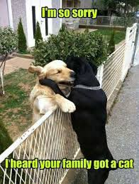 Memes Funny Animals - funny animals memes pict funny pictures check out for amazing and