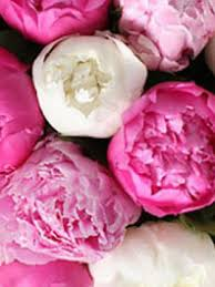 peonies flowers peonies wedding flowers wedding centerpieces