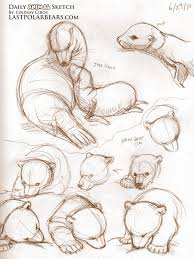 daily animal sketch u2013 sea lions and polar bears u2013 last of the