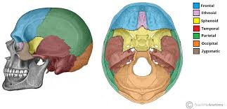 Parts Of Ethmoid Bone Sphenoid Bone Location Structure Function Teachmeanatomy