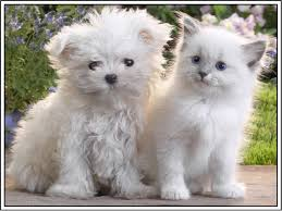 dogs and puppies and cats and kittens