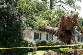 a tree fell from one property and damaged another whose insurance