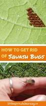 160 best insects tips ideas images on pinterest garden tips