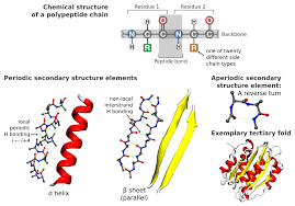 going clean structure and dynamics of peptides in the gas phase