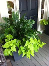 best 25 front porch plants ideas on pinterest deck plants ideas