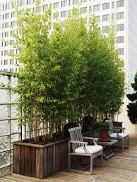 bamboo plants in the garden