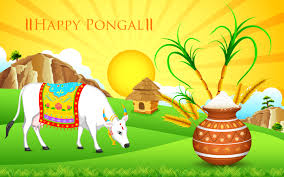 happy pongal 2017 images pictures sankranthi hd wallpapers
