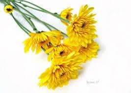 Discount Flowers Bulk Discount Flowers Lavender Cushion Chrysanthemum