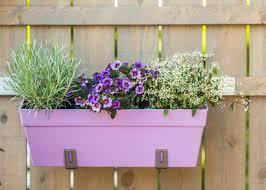 balkon grã npflanzen perfekte balkonpflanzen renovieren einrichten