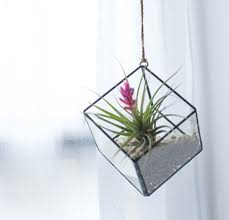 terrarium containers perfect for air plants u2013 46 u0026 spruce home