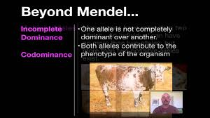 beyond mendelian genetics youtube