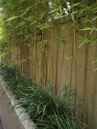 Concrete Planter Boxes by Best 25 Bamboo Planter Ideas Only On Pinterest Bamboo Screening